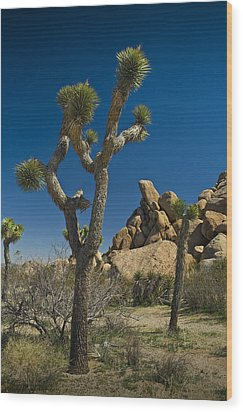 California Joshua Trees In Joshua Tree National Park By The Mojave Desert Wood Print by Randall Nyhof