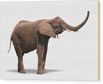 Joyful Elephant Isolated On White Wood Print