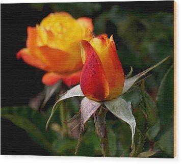 Judy Garland Rose Wood Print by Rona Black
