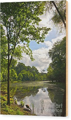 July Fourth Duck Pond With Goose Wood Print by Byron Varvarigos
