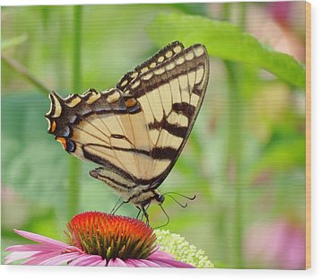 July Swallowtail Wood Print by MTBobbins Photography