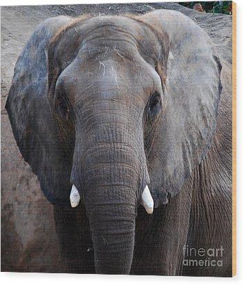 Wood Print featuring the photograph Jumbo by Nancy Bradley