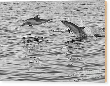 Jump For Joy - Common Dolphins Leaping. Wood Print by Jamie Pham