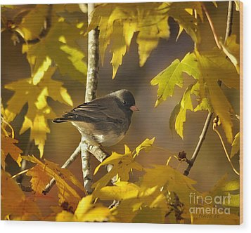 Junco In Morning Light Wood Print by Nava Thompson