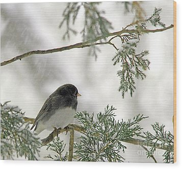 Wood Print featuring the photograph Junco In Snowstorm by Paula Guttilla