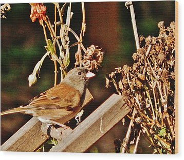 Wood Print featuring the photograph Junco Jaunt 2 by VLee Watson