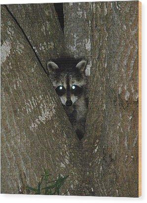 Baby Raccoon And Jesus Wood Print