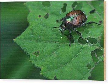 June Bug 1 Wood Print by Jeffrey Platt
