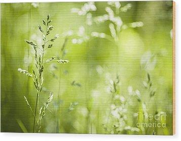 June Grass Flowering Wood Print by Elena Elisseeva