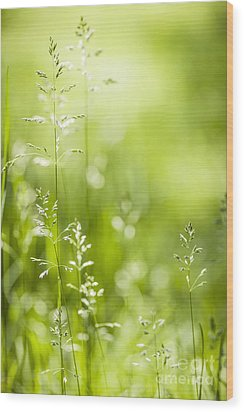 June Green Grass  Wood Print by Elena Elisseeva