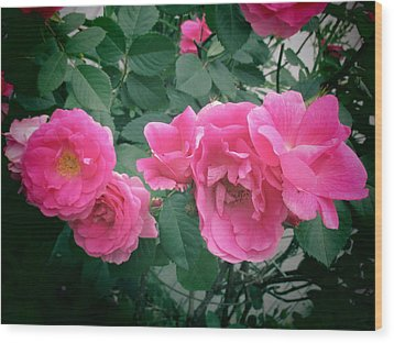 June Rose II Wood Print