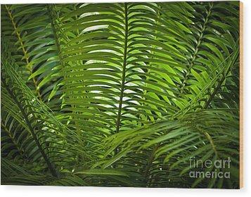 Jungle Fern Wood Print