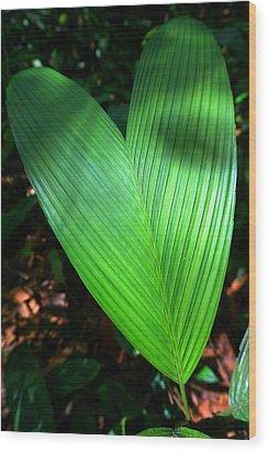 Jungle Heart Wood Print by Julia Ivanovna Willhite