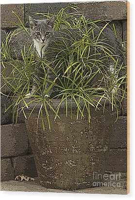 Jungle Kitty All Profits Go To Hospice Of The Calumet Area Wood Print