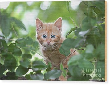 Jungle Kitty Wood Print by Debbie Green