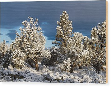 Juniper Trees In Snow Wood Print by Chris Scroggins