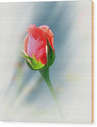 Just A Bud Wood Print by Judy Palkimas