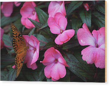 Wood Print featuring the photograph Just A Small Taste For This Butterfly by Thomas Woolworth