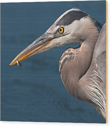 Just An Appetizer For A Great Blue Heron Wood Print by Kasandra Sproson
