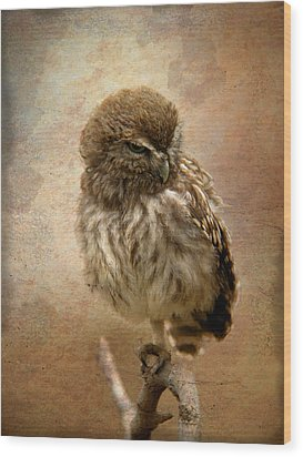 Just Awake Little Owl Wood Print by Perry Van Munster