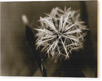Just Dandy Dandelion Wood Print by Isabel Laurent