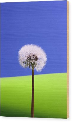 Wood Print featuring the photograph Just Dandy by Paula Brown