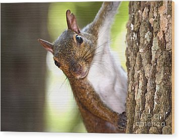 Just Hanging Around Wood Print by Chad and Stacey Hall