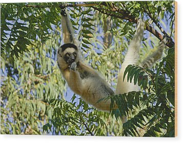 Just Hanging Around Wood Print by Michele Burgess