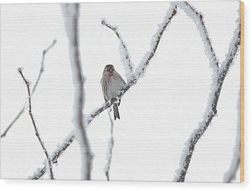 Wood Print featuring the photograph Just Hanging Out by Dacia Doroff