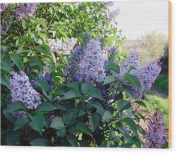 Just Lilac Wood Print by Dorothy Berry-Lound