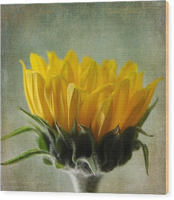 Just Opening Sunflower Wood Print by Denyse Duhaime