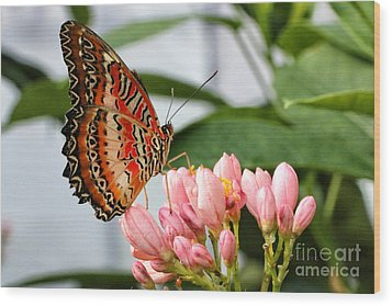 Just Pink Butterfly Wood Print by Shari Nees