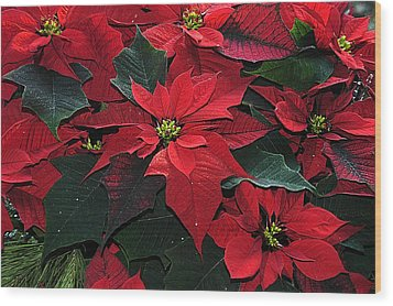 Just Poinsettia's Wood Print