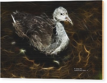 Juvenile Coot 9042 - F Wood Print by James Ahn