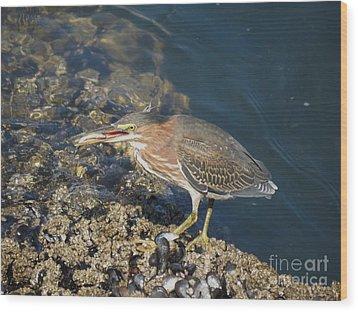 Juvenile Green Heron Wood Print by Gayle Swigart