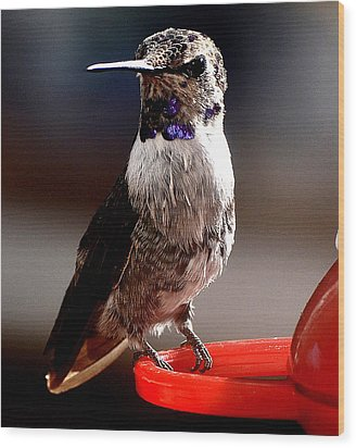Wood Print featuring the photograph Juvenile Male Anna On Perch by Jay Milo