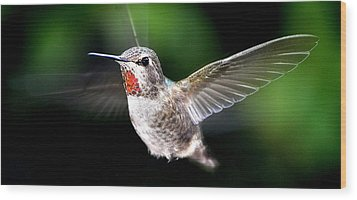 Juvenile Red Thoated Hummingbird Wood Print