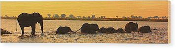 Wood Print featuring the photograph Kalahari Elephants Crossing Chobe River by Amanda Stadther