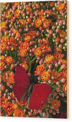 Kalanchoe Plant With Butterfly Wood Print by Garry Gay