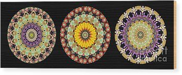 Kaleidoscope Ernst Haeckl Inspired Sea Life Series Triptych Wood Print by Amy Cicconi