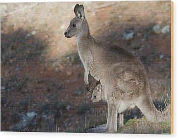 Kangaroo And Joey Wood Print by Steven Ralser