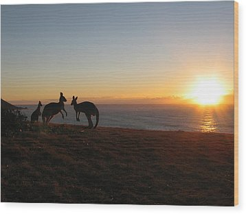 Kangaroo Family Sunset Wood Print by Andrew Garde Joia
