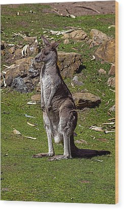 Kangaroo Wood Print by Garry Gay