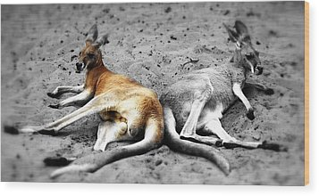 Kangaroo Heart Wood Print by Andrew Connolly