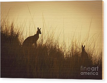 Kangaroo Silhouettes Wood Print by Tim Hester