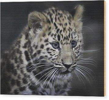 Wood Print featuring the photograph Kanika - Amur Leopard Portrait by Chris Boulton