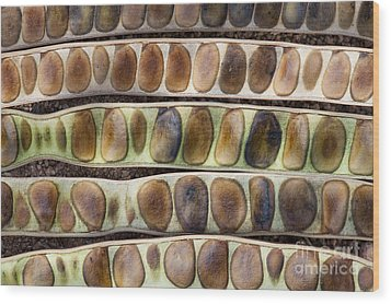 Kassod Tree Seed Pods Pattern Wood Print by Tim Gainey