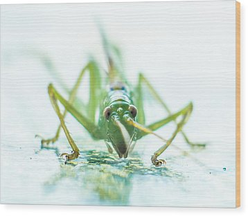 Katydid Wood Print by Carl Engman