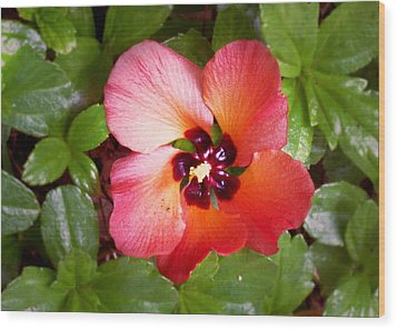 Kauai Flower Wood Print