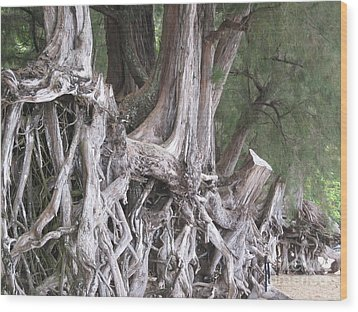 Kauai - Roots Wood Print by HEVi FineArt